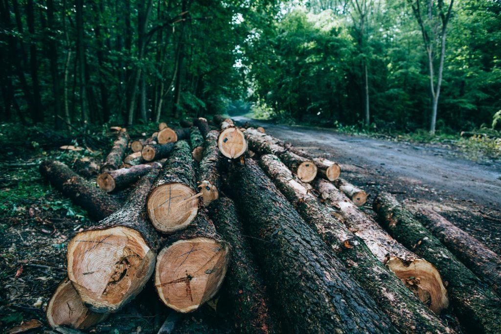 Ťažba a výkup dreva, výmena porastu